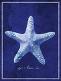 Starfish Posters