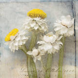 Winged Everlasting Print by Thea Schrack