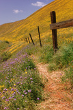 Central Valley Spring Roadside Scene Photographic Print by Vincent James