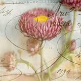 Purple Strawflower I Poster by Thea Schrack