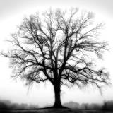 Fountain Oak Reprodukcje autor Jamie Cook