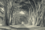 Cypress Tree Road, Point Reyes Fotografie-Druck von Vincent James