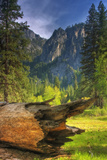 View of the Fallen Tree, Yosemite Valley Photographic Print by Vincent James