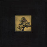 Bonsai Sacred Tree Prints