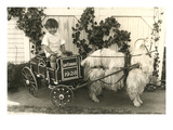Little Boy in Goat Cart Prints