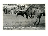 Cowboy Bucked Off Bronco, Montana Prints