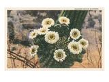 Saguaro Cactus Blossoms Art