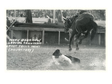 Cowboy Bucked Off Bronco, Montana Posters