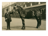 Man in Bowler with Draft Horse Poster