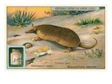 Armadillo in Desert Posters