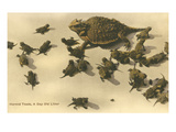 Baby Horned Toads Affiches
