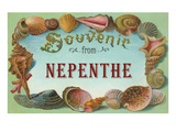 Seashell Souvenir from Nepenthe, California Prints
