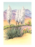 Yucca and Cactus Plants Posters