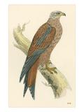 Illustration of Kite on Branch Art