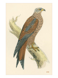 Illustration of Kite on Branch Photo