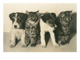 Puppies and Kittens Prints