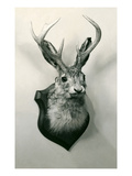 Stuffed Jackalope Prints