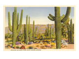 Saguaro National Park, Tucson, Arizon Poster