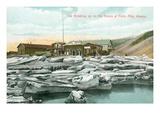 Spring Break-Up, Forty Mile, Alaska Prints
