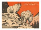Greetings from Idaho Springs, Colorado Poster