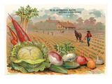 Vegetables, Old Fashioned Farm Ensiluokkainen giclee-vedos