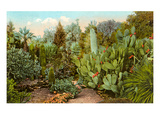 Cactus and Succulent Garden Posters