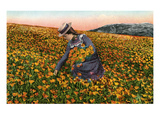 Picking California Poppies Prints