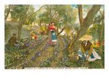 Violet Harvest, Grasse, France Art