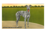 Happy Dog, Volusia Kennel Club Prints