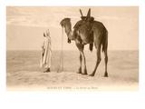 Desert Prayer, Bedouin and Camel Posters