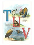 Alphabet Animals, Tm U and V Art