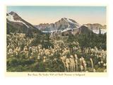 Bear Grass, Glacier Park, Montana Prints