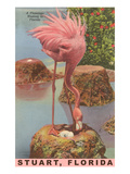 Flamingo Nesting in Stuart, Florida Plakaty