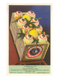 Crate of Indian Rocks Grapefruit Poster