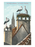 Storks in Strasbourg, France Reproduction giclée Premium
