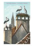 Storks in Strasbourg, France Affiches