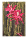 Cactus Flowers Posters