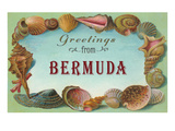 Greetings from Bermuda, Seashells Prints