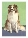 Smiling Collie Posters