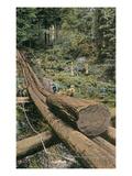 Redwood Log on Log Chute Posters