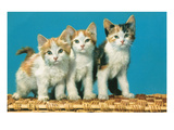 Three Kittens on a Basket Prints