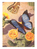 Butterflies on Cactus Flowers Prints