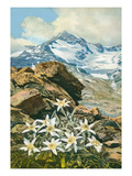Alpine Orchids Prints