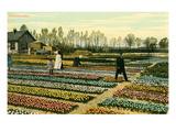 Hyacinth Garden, Holland Art