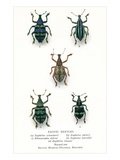 Exotic Beetles Prints