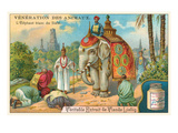 Veneration of Animals, White Elephant Prints