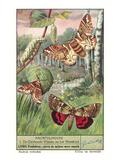 Moths and Caterpilar Art