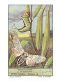 Moth and Caterpillar Poster
