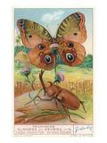 Tropical Insects Prints