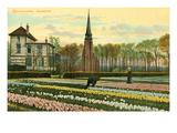 Hyacinth Fields, Sassenheim, Holland Art